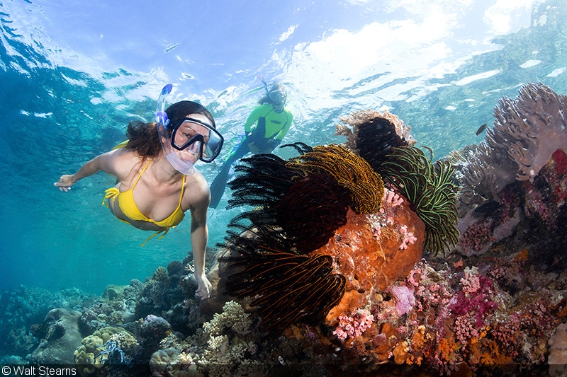 surface shooting at wakatobi getting the most from your snorkel images