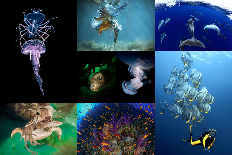 OWU And DEEP Indonesia Underwater Photography Competitions - The best underwater photographs of 2016 are amazing