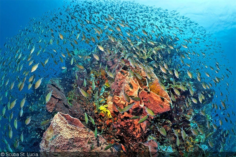 Caribbean Sea Animal Life: SeaLife Photography Teaching And Rental Center Unveiled In