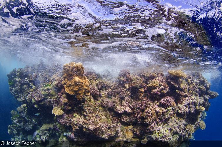 Image Orientation: Landscape vs. Portrait in Underwater Photography
