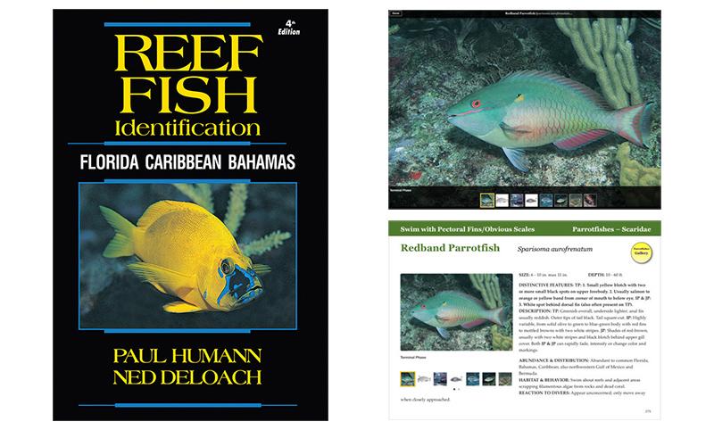 new enhanced e book version of reef fish identification