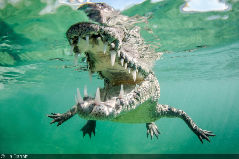 Los jardines de la reina face to face with cuba s crocs for Jardin de la reina granada