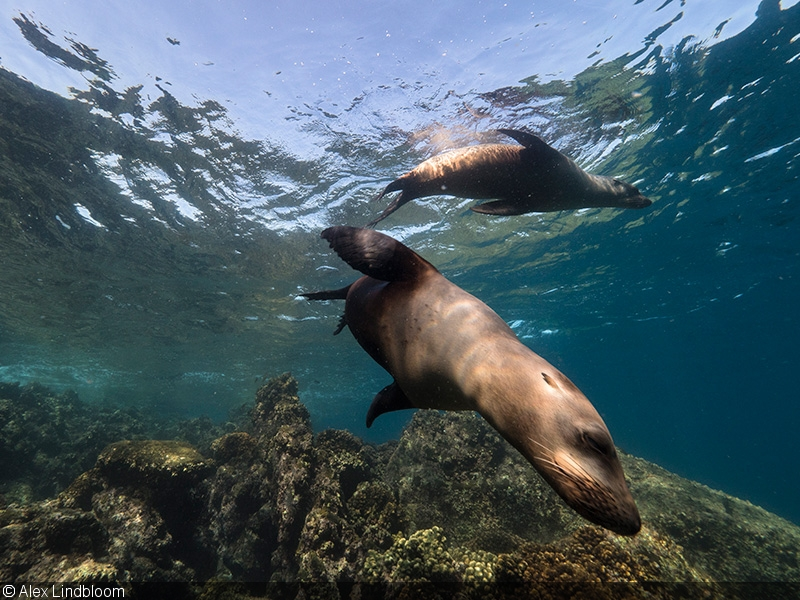 The Best of Mexico with the Panasonic GH5 – Part III: Sea Lions and