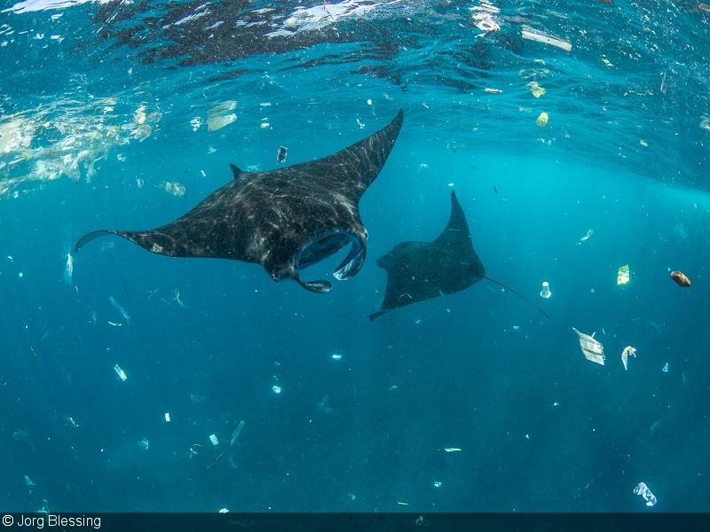 Documenting Marine Plastic Pollution In Bali
