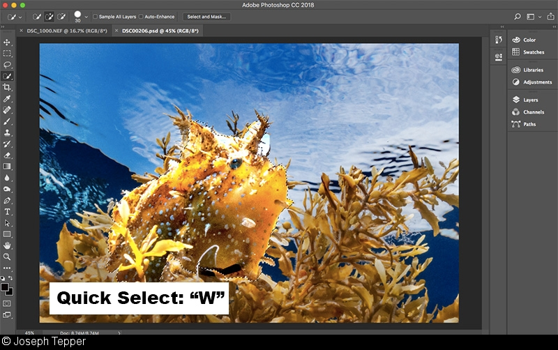 Quick Tip: Photoshop Shortcuts for Underwater Photographers