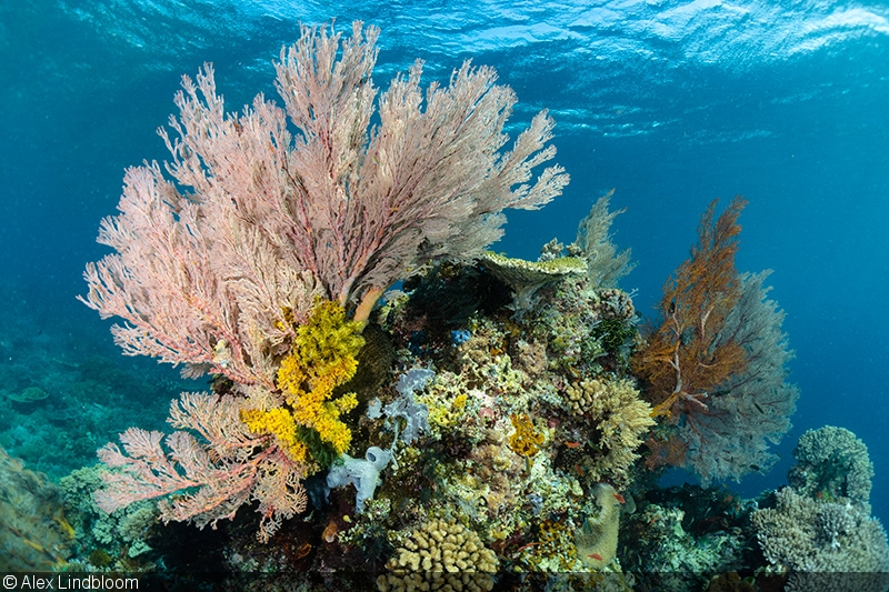 Wrecks, Reefs and Rays with the Sony a6400 in Fantasea Housing: Part