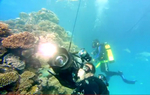 Google Dives into Underwater Photography with Street View