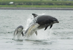 Mass Dolphin Deaths Causes Concern
