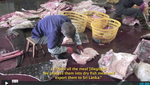 A Look into the Biggest Whale Shark Processing Factory