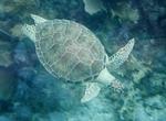 Scientists Plea for Sustainable Deep-Sea Mining