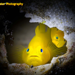 New Issue of Underwater Photography Magazine