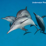 New Issue of Underwater Photography Published
