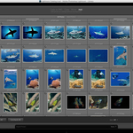 Adobe Releases Lightroom Creative Cloud