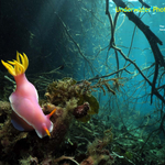 New Issue of Underwater Photography Magazine Available