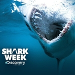 Discovery's Shark Week Kicks off in USA and Canada