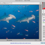 Adobe Camera RAW 9.5 Gets Facelift