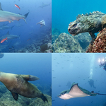 April NYUPS Meeting: Underwater Photography in the Galapagos