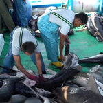 Illegal Fishermen Arrested in the Galapagos
