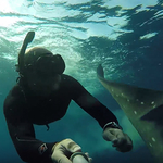 Whale Shark Poops on Snorkeler