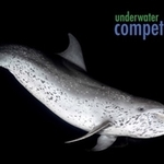 Reminder: Underwater Competition Series 2017
