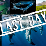 Our World Underwater Contest: Final Day to Enter!