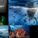 2017 DEEP Indonesia Photo Competition Winners Announced