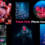 Announcing the First Think Pink Photo Competition
