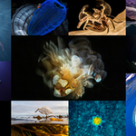 Our World Underwater 2018 – One Week Till the Deadline!