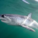 Shark Skin Could Revolutionize Aerodynamics