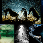 Our World Underwater 2018 Competition Winners Announced