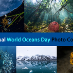 Fifth Annual World Oceans Day Photo Competition