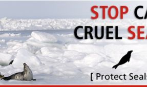 Join The Humane Society  Protest To Stop The Canadian Seal Hunt