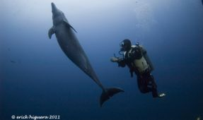 Rey To The Rescue- Solmar V Divemaster Saves Dolphin!