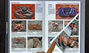 New World Publication Releases Reef Creature Identification - Tropical Pacific as eBook