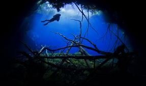 More Underwater Photos With Nauticam NA-D800 by Keri Wilk