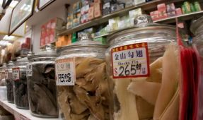Illinois Moves to Ban Shark Fins