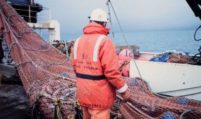 """Escape Rings"" Will Help Trawling Become More Sustainable"