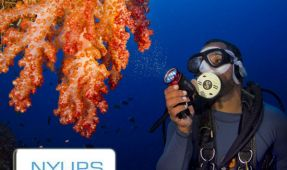 New York Underwater Photography Society Meeting: Adding Divers to Your Image