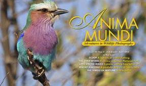 ANIMA MUNDI: Issue 10 Now Available
