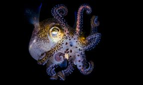 DPGer's Brilliant Squid Photos Featured on ABC News