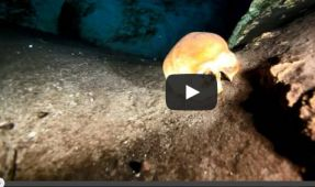 Video: Diving Cenote Sac Uayum's Inner Sanctum