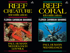 Updated Versions of Popular Reef ID Books Now Available