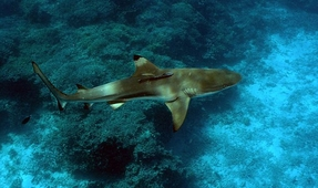 Using Sharks to Predict Storms