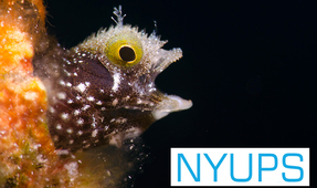 Final Call for Images: New York Underwater Photo Society August Meeting