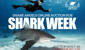 Shark Angels Launches Shark Week Auction
