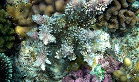 Baby Coral and Fish Sniff Out Good Habitats