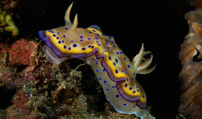 Nudibranch Photo Contest: Final Reminder