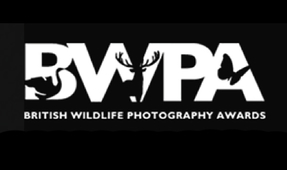 British Wildlife Photography Awards 2014 Announced