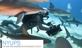 Shark Videographer Joe Romeiro at NYUPS Tonight