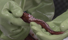 Video: Colossal Squid Autopsy
